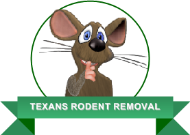 Austin Texas Rodent Removal | Remove Rodents