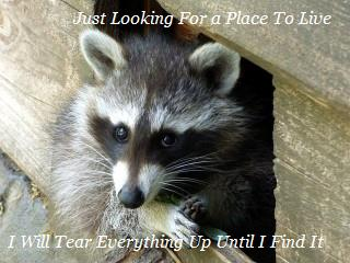 Austin Texas Rodent Removal | Remove Rodents | Raccoons